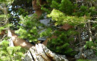 Man sitting in tree